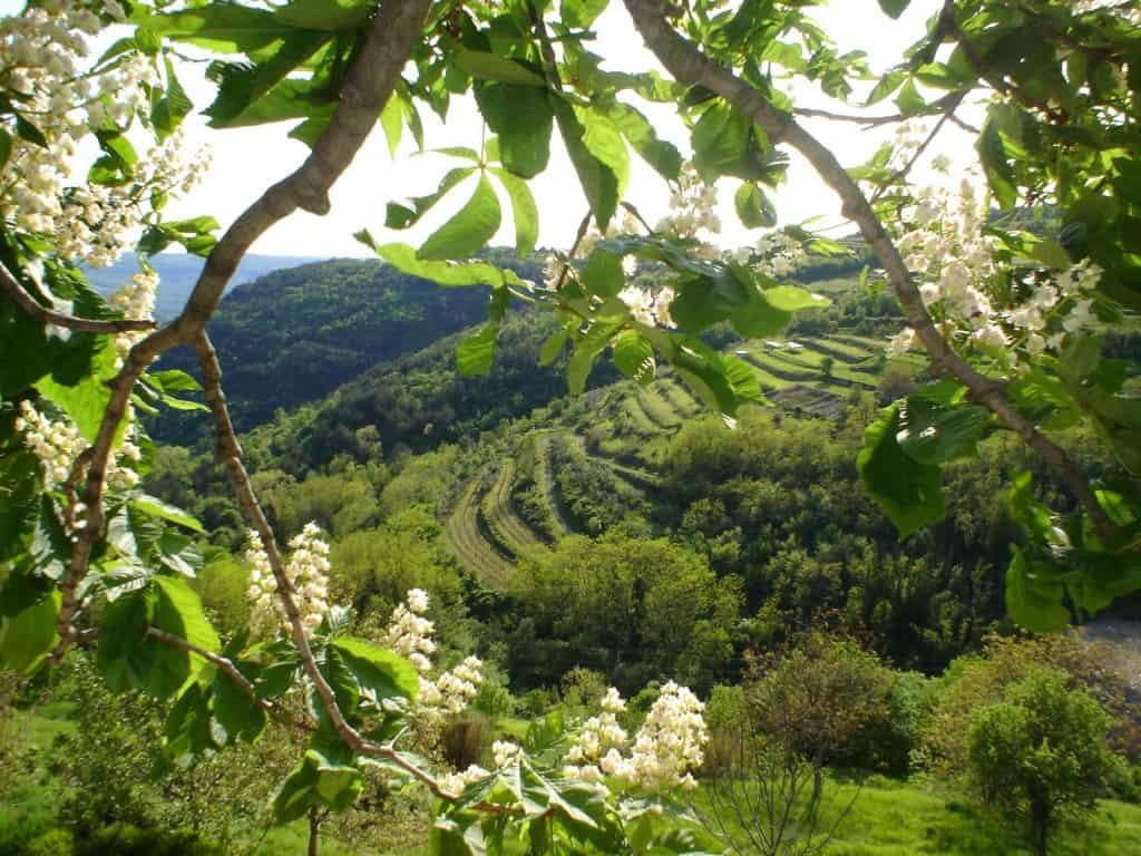 נוף במערב איסטריה (בעיירה Oprtalj)