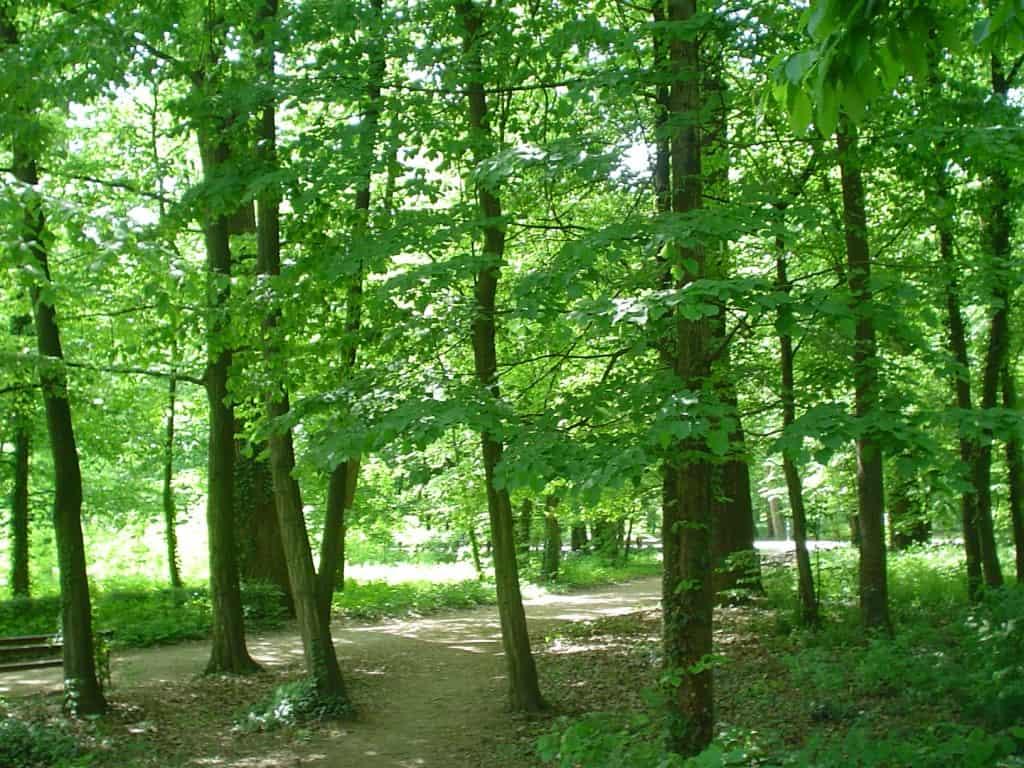פארק מקסימיר בזגרב